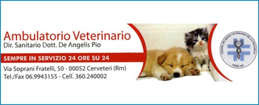 pronto soccorso veterinario, radiologia animali, operazioni veterinarie, Cerveteri, Civitavecchia, Roma