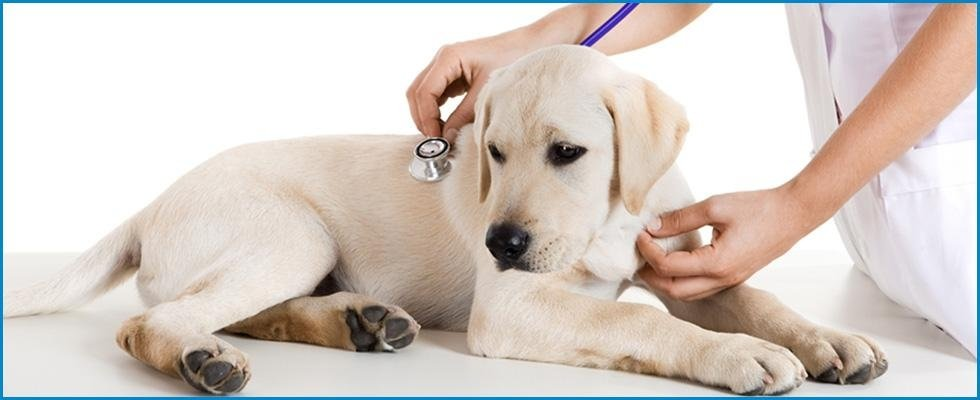 clinica veterinaria, veterinario, ambulatorio veterinario, 24 h, Cerveteri, Civitavecchia, Roma