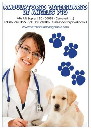 Ambulatorio Veterinario, Cerveteri, Civitavecchia, Roma