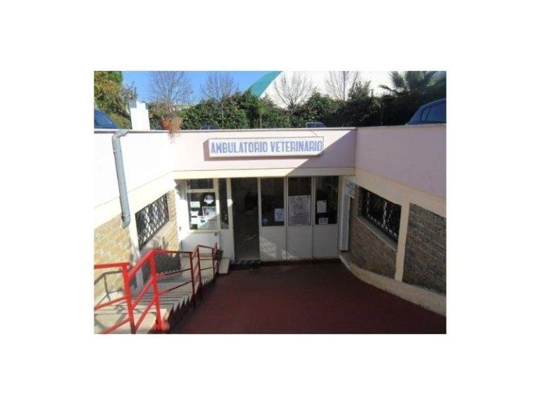 la clinica veterinaria de Angelis Pio