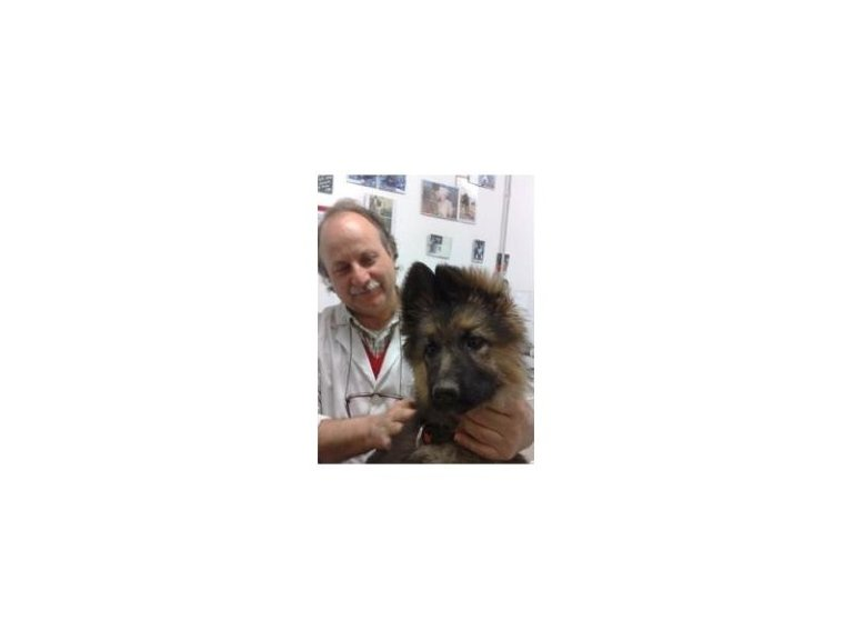 vaccinazioni cuccioli, Pio de Angelis, Clinica Veterinaria, Ospedale Veterinario, Cerveteri, Civitavecchia, Roma