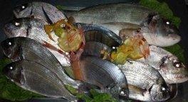Specialità pesce Latina