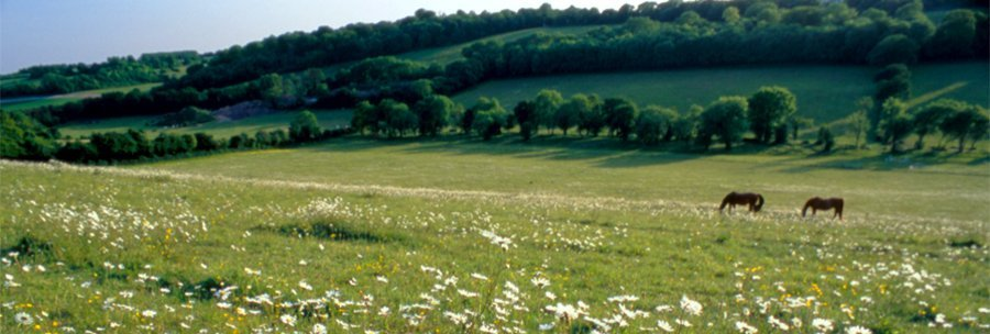 Churchyard Memorials - Hampshire Memorials - Farnborough