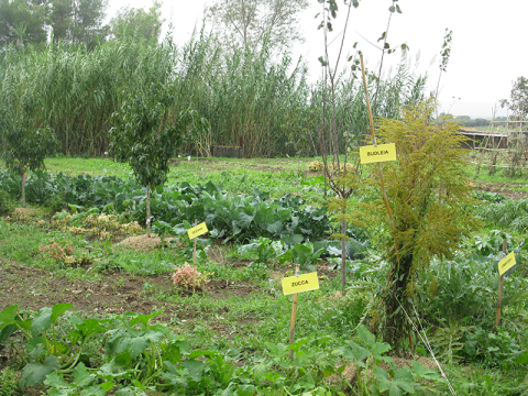 Area Didattica presso Agricampig/Agripark Il Pantano