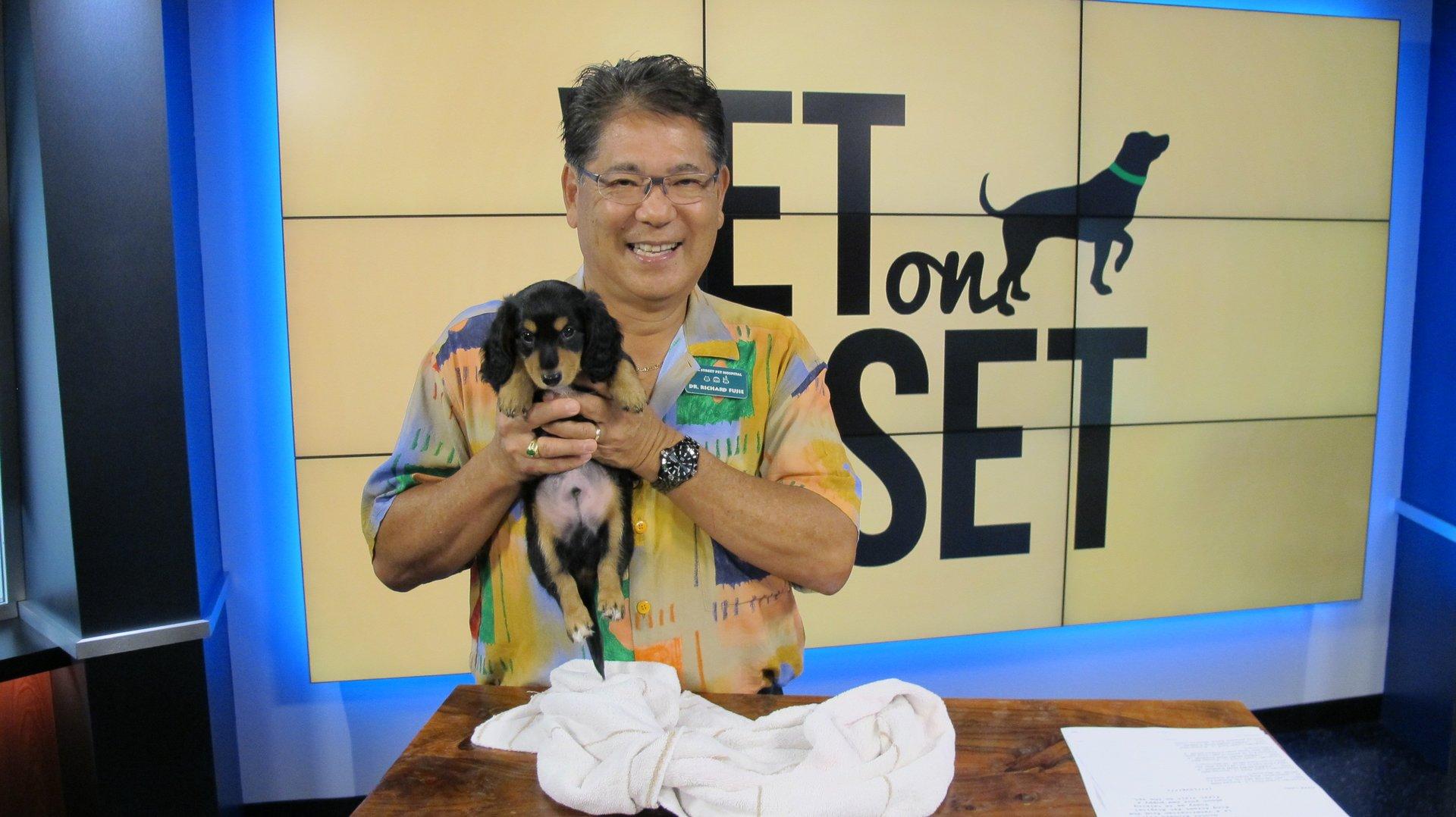 Veterinarian Honolulu Hi King Street Pet Hospital