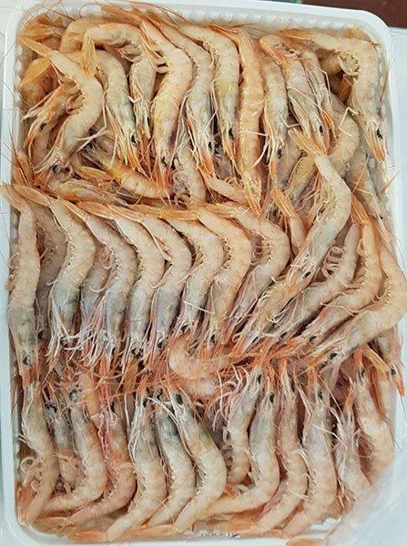 pescato di gamberoni a mazara del vallo
