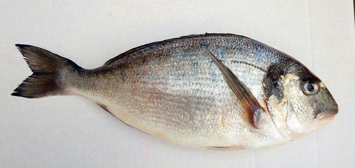 Immagine di un pesce fresco a mazara del vallo