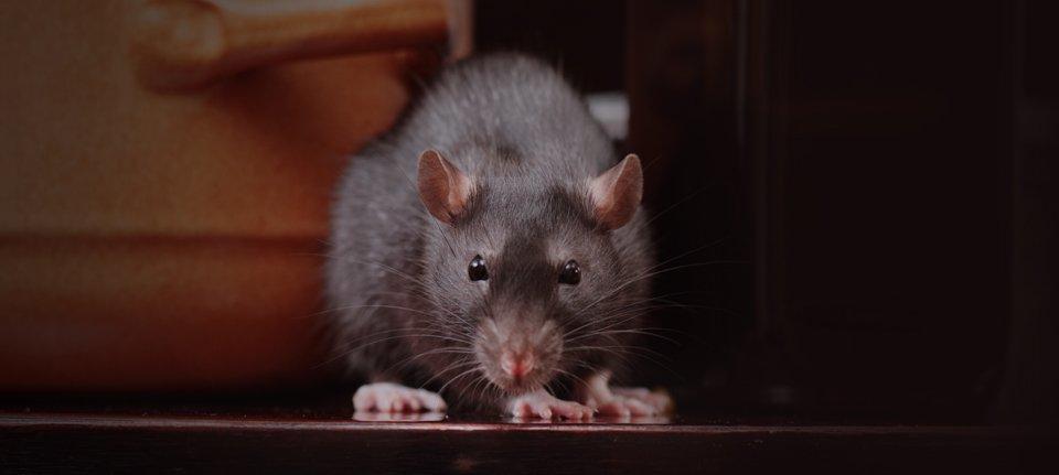 Professional pest and vermin control in Coleraine