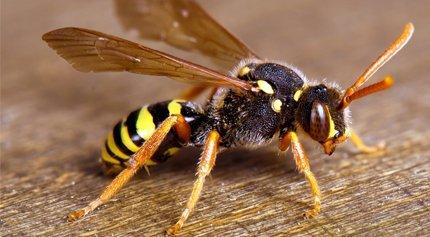 Reliable pest control
