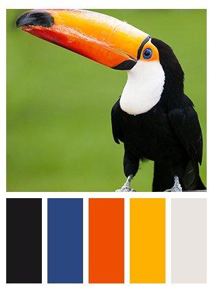 foto tucano e scala colori simili