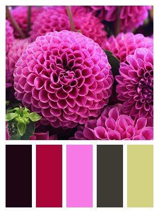 fiore porpora con scala colori