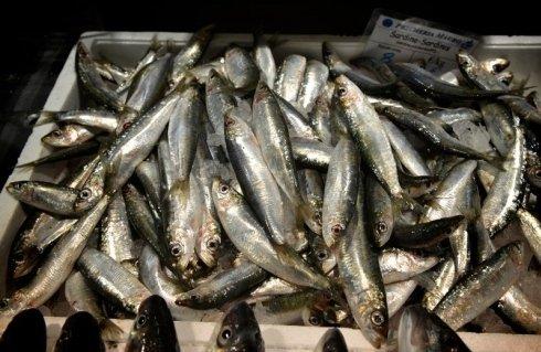 Pescato ittico