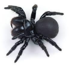 Spider found in homes
