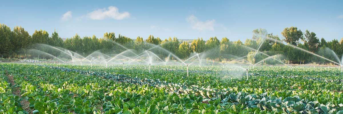 daish irrigation and fodder hero 2
