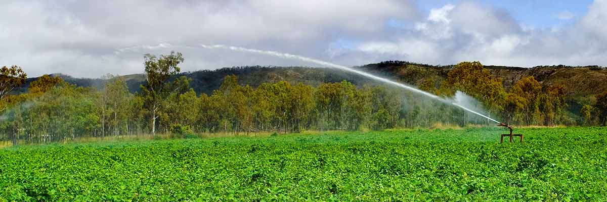 daish irrigation and fodder hero 6