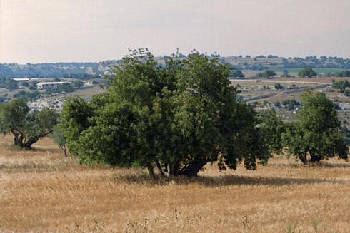 frutti siciliani