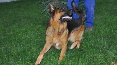 allevamento cani emilia