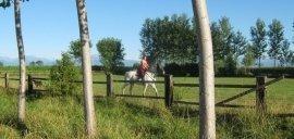 centro estivo, passeggiate a cavallo, scuola pony