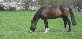 concorsi ippici, scuola equitazione per bambini, scuole di cavalli