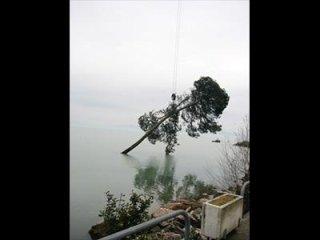 Recupero albero