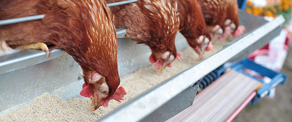 Poultry Food Suppliers Pharmall Ltd