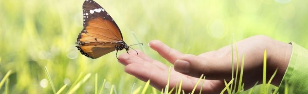 mano che tiene una farfalla