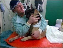 sostegno terapeutico animali