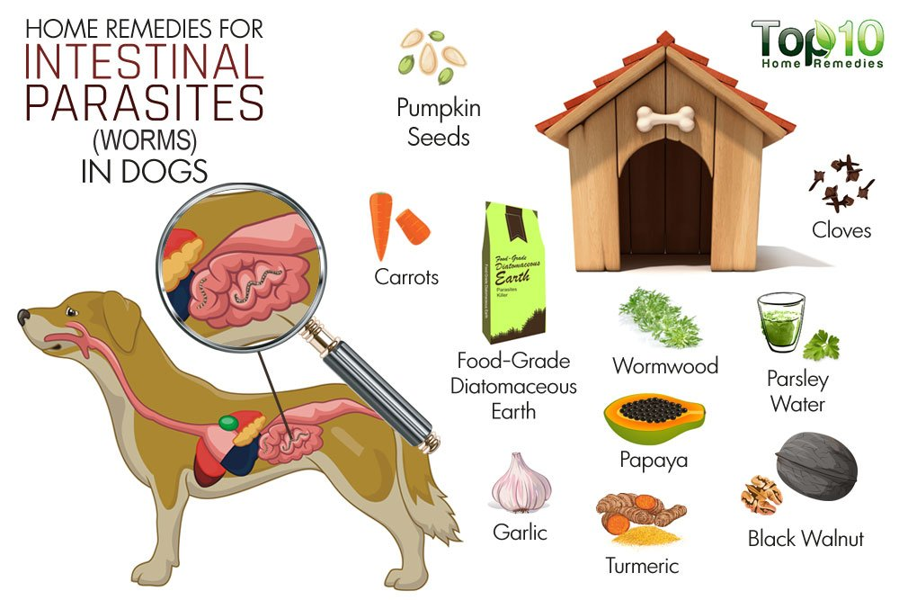 Alternatives To Chemical De Wormers