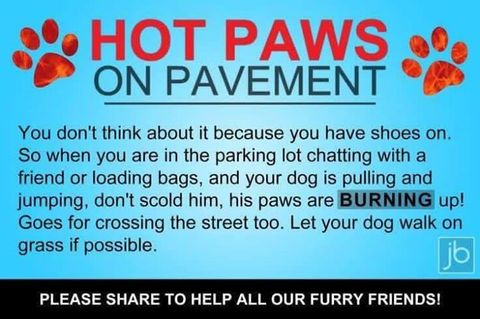 Furry Feasts Hot paws on pavement warning
