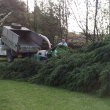 Tree surgery - Dover - J.H Cox & M.P Hammond - Tree work