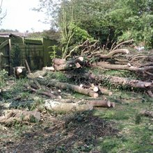 Tree felling - Kent - J.H Cox & M.P Hammond - Tree work