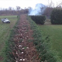 Tree work - Dover - J.H Cox & M.P Hammond - Hedge trimming