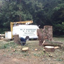 Tree surgery - Dover - J.H Cox & M.P Hammond - Site clearance