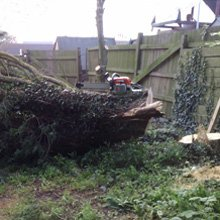 Tree work - Dover - J.H Cox & M.P Hammond - Site clearance