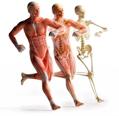 ecografia muscolare Centro Clinico Ortopedico