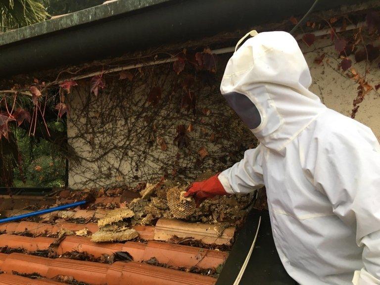 Disinfestazione dalle vespe