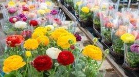 fiori freschi, fiori, fiori recisi