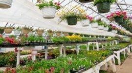 fiori, piante, fiorista