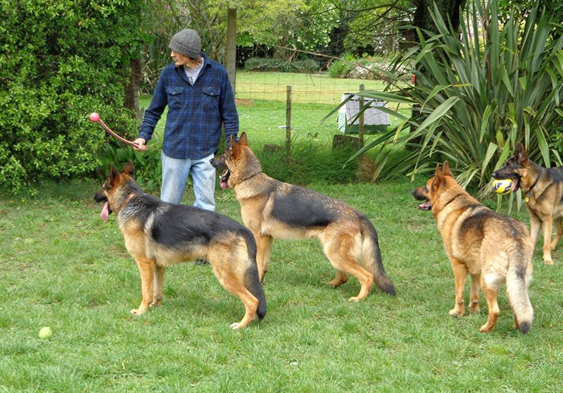 Dogs training in the garden