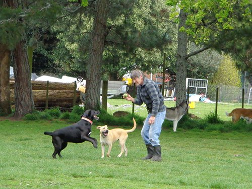 Instructor playing with the dog