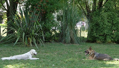 Dogs playing in the open with others