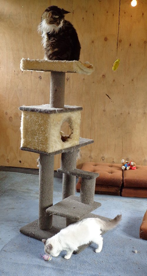 Play room for cat