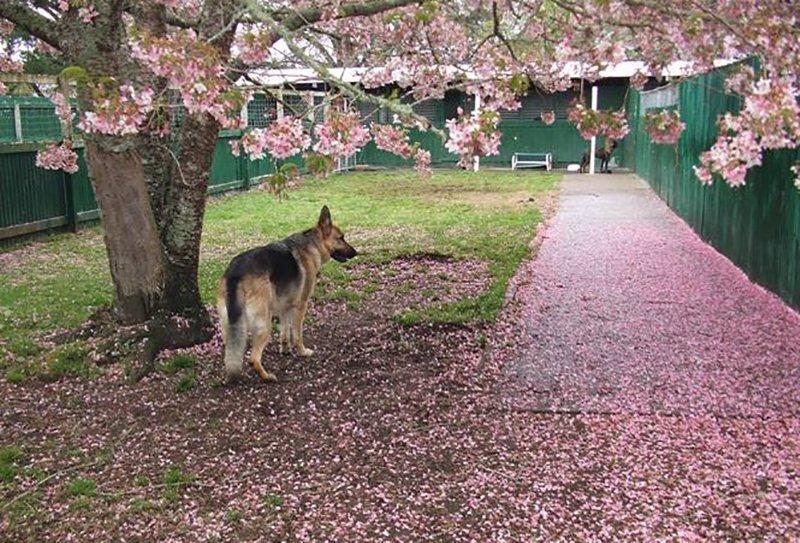 Dog waiting under tree