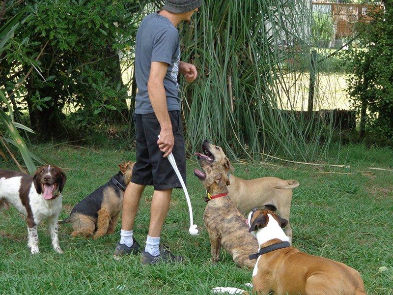 Dogs tarining in the garden