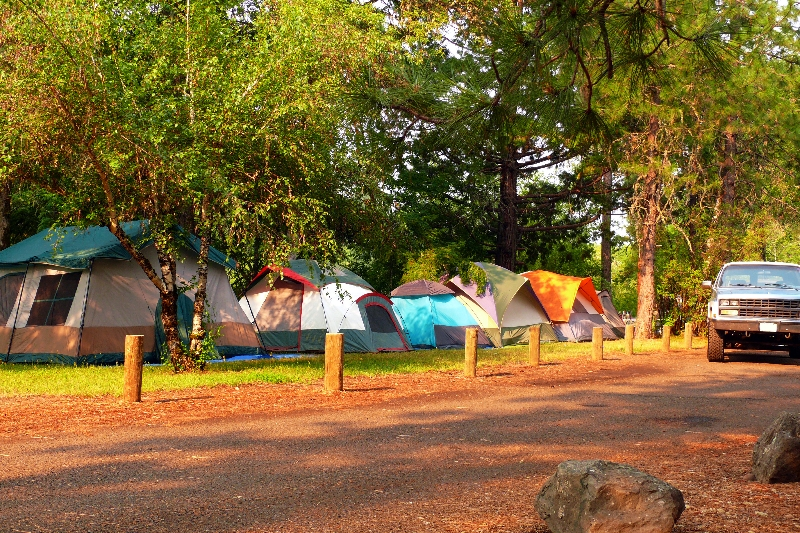 several tents pitched under trees