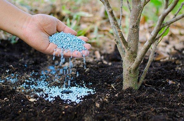 una mano che versa un prodotto per piante