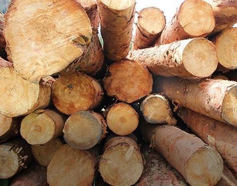 Prime lavorazioni di legno