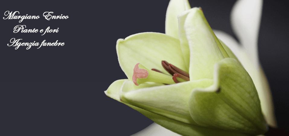 fiore con scritta Murgiano Enrico Piante e fiori Agenzia funebre