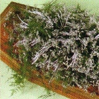Gipsofila, Limonium sinensis, asparago plumosa, Grevillea
