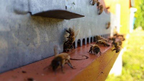 delle api